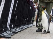 Thế giới - Na Uy phong Chuẩn tướng cho chim cánh cụt