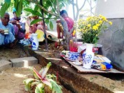 Tin tức trong ngày - Dân đổ xô, cúng vái cây chuối 15cm nở liền 6 bắp hoa