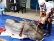 Cận cảnh xẻ thịt cặp  thủy quái  ở Sài Gòn