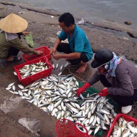 """Vì sao khó khẳng định cá ở miền Trung """"ăn được chưa""""?"""