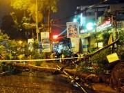 Tin tức trong ngày - Kỳ lạ cây xanh bật gốc 7 lần ở Sài Gòn