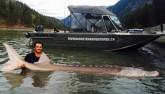 """Bắt được cá """"mõm lợn"""" dài 3m nặng 3 tạ ở Canada"""