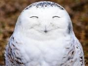 Tranh vui - Những khoảnh khắc hài hước trong thế giới động vật