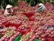 Thị trường - Tiêu dùng - Xử phạt nhiều thương lái Trung Quốc thua mua thanh long trái phép