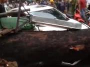 Video An ninh - Cây cổ thụ bật gốc, dân vứt xe tháo chạy toán loạn