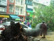 Tin tức trong ngày - Cây đổ đè chết người ở Sài Gòn: Lỗi tại thời tiết!