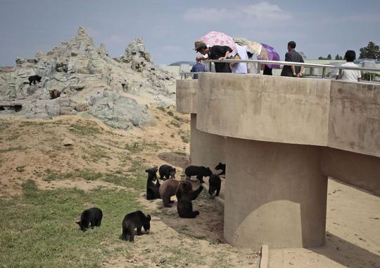 Đi sở thú ở Triều Tiên - 7