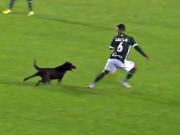 Bóng đá - Ăn mừng bàn thắng, chú chó rượt cầu thủ chạy đứt hơi