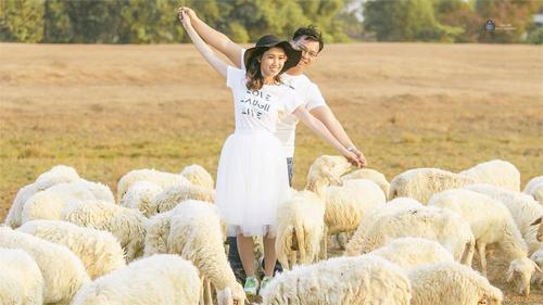 Đến cánh đồng cừu đang