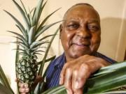 Phi thường - kỳ quặc - Anh: Mất 8 năm cuộc đời để trồng 1 quả dứa