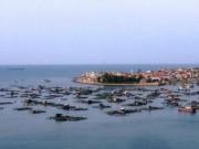 Tin tức trong ngày - Cá chết hàng loạt ở Thanh Hóa do thủy triều đỏ?