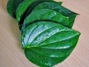 Sức khỏe đời sống - Hãy dùng lá này súc miệng, bỏ qua nước hoá chất đang quảng cáo rầm rộ