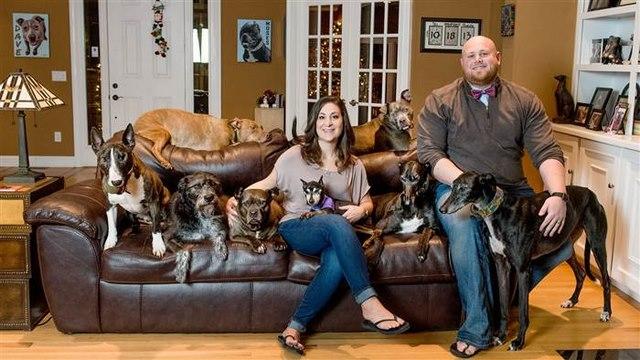 Vợ chồng đóng giường siêu rộng ngủ cùng 8 chú chó hoang - ảnh 1
