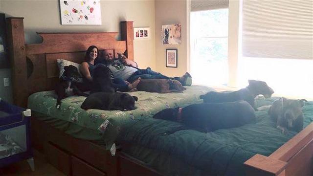 Vợ chồng đóng giường siêu rộng ngủ cùng 8 chú chó hoang - ảnh 6