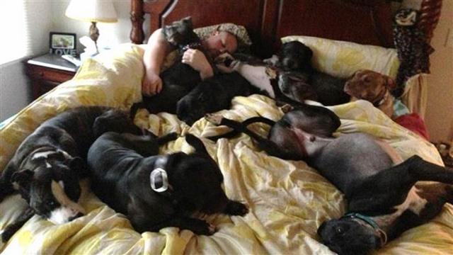 Vợ chồng đóng giường siêu rộng ngủ cùng 8 chú chó hoang - ảnh 5