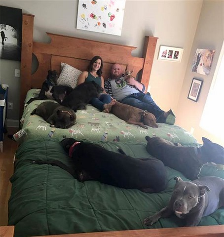Vợ chồng đóng giường siêu rộng ngủ cùng 8 chú chó hoang - ảnh 4
