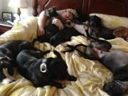 Phi thường - kỳ quặc - Vợ chồng đóng giường siêu rộng ngủ cùng 8 chú chó hoang
