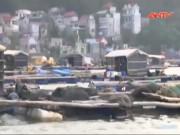 Video An ninh - Cá chết hàng loạt ở Tĩnh Gia: Những mâu thuẫn khó hiểu
