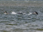Phi thường - kỳ quặc - Bức ảnh thuyết phục nhất chụp quái vật hồ Loch Ness