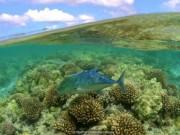 Thế giới - Kho báu chưa được khám phá ở Hawaii
