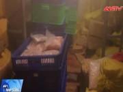 """Thị trường - Tiêu dùng - Phát hoảng hơn 1 tấn """"thịt ngoại"""" om trong kho lạnh"""