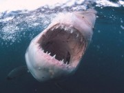 """Thể thao - """"Chạy mất dép"""": Đang chèo thuyền bị cá mập đuổi"""