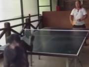 """Thể thao - """"Đứng hình"""" với chú khỉ chơi bóng bàn siêu đẳng"""