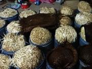 Thị trường - Tiêu dùng - Phát hiện cơ sở dùng hóa chất ủ giá đỗ