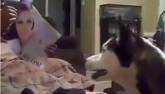 Phản ứng hốt hoảng của chó cưng khi thấy gái đẹp
