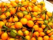 Phi thường - kỳ quặc - Hốt hoảng với loại ớt giá gần 600 triệu đồng một cân