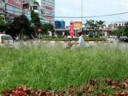 Tin tức trong ngày - Chủ tịch Hà Nội giải thích việc dừng chi tiền cắt cỏ