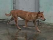 Tin tức trong ngày - Một xã có hàng chục người bị chó cắn, 1 người tử vong