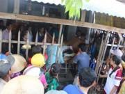 An ninh Xã hội - Nghi án chồng trẻ đâm chết vợ rồi tự tử ở An Giang