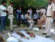 Ấn Độ: Chôn chồng dưới sàn nhà vì hết tiền mua mộ