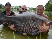 Thế giới - Câu được cá chép khổng lồ nặng nhất thế giới ở Thái Lan
