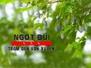 Du lịch - Khám phá làng trám đen Vân Xuyên
