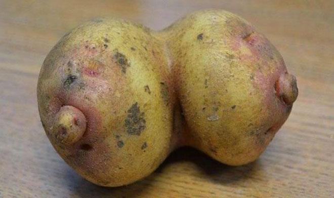 Hôm qua đào được củ khoai, lạ kỳ nó lại như 2 CÁI GÌ? - 1