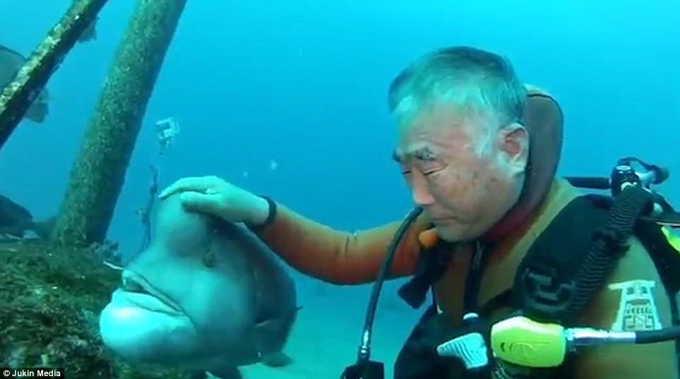 Nhật Bản: Cá khổng lồ 25 năm cho ân nhân ôm ấp, vuốt ve - 1