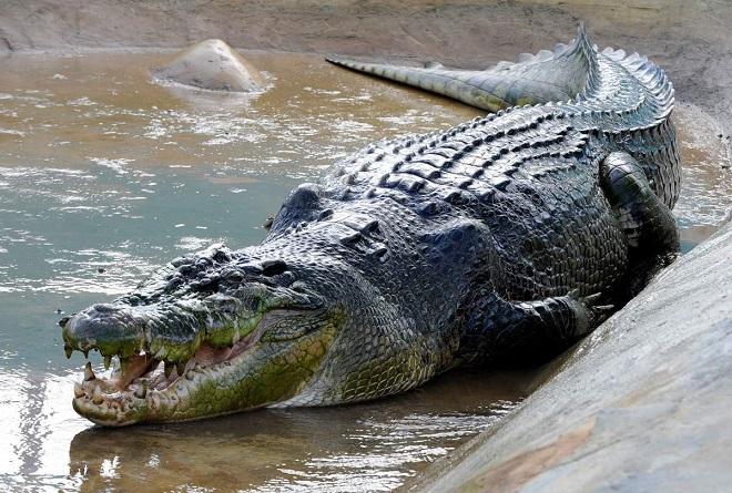 Con cá sấu giết, ăn thịt 300 người, khiếp sợ nhất thế giới - 3