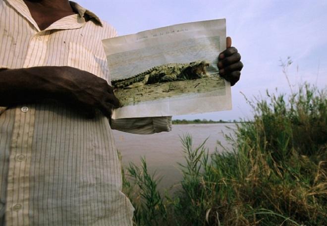 Con cá sấu giết, ăn thịt 300 người, khiếp sợ nhất thế giới - 6