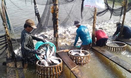 Xuất khẩu cá tra: Việt Nam có thể kiện Mỹ - 1
