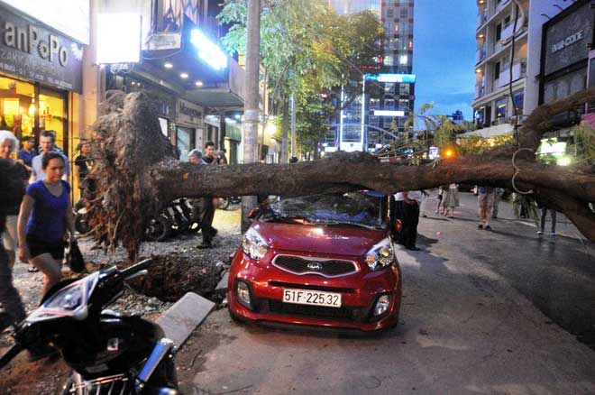 Cây xanh bật gốc đè bẹp ô tô 4 chỗ ở trung tâm Sài Gòn - 2
