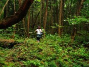 Khu rừng ám ảnh với những vụ tự sát ở Nhật Bản