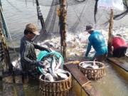 Thị trường - Tiêu dùng - Xuất khẩu cá tra: Việt Nam có thể kiện Mỹ