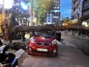 Tin tức trong ngày - Cây xanh bật gốc đè bẹp ô tô 4 chỗ ở trung tâm Sài Gòn