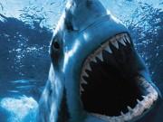 Phim - Hàm Cá Mập phiên bản dưới nước thách thức lòng dũng cảm khán giả