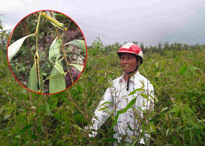 Nóng 24h qua: Nông dân kể chuyện sâu lạ rung cây… hù người
