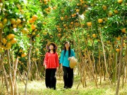 Hè rồi, làm ngay một chuyến về miền Tây thăm vườn cây trái trĩu quả thôi!
