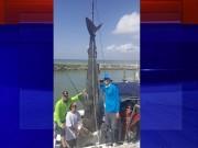 Thế giới - Mỹ: Câu được cá mập hổ khổng lồ, suýt lật thuyền