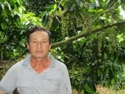 Thị trường - Tiêu dùng - Thu tiền tỷ nhờ trồng cây trái kết hợp du lịch sinh thái